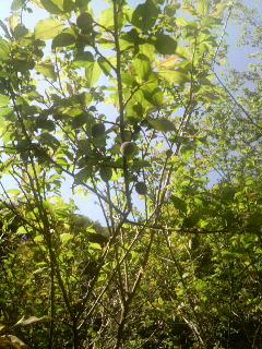 山桜が終わり新緑の季節が来ました