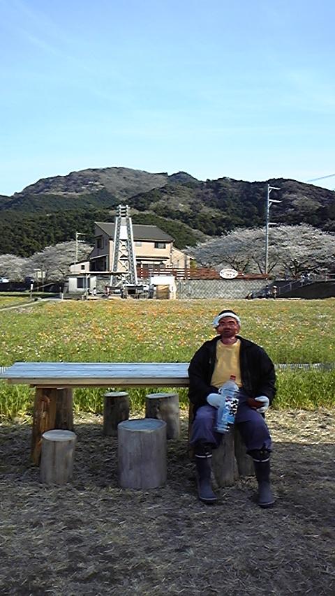 松崎でお花見